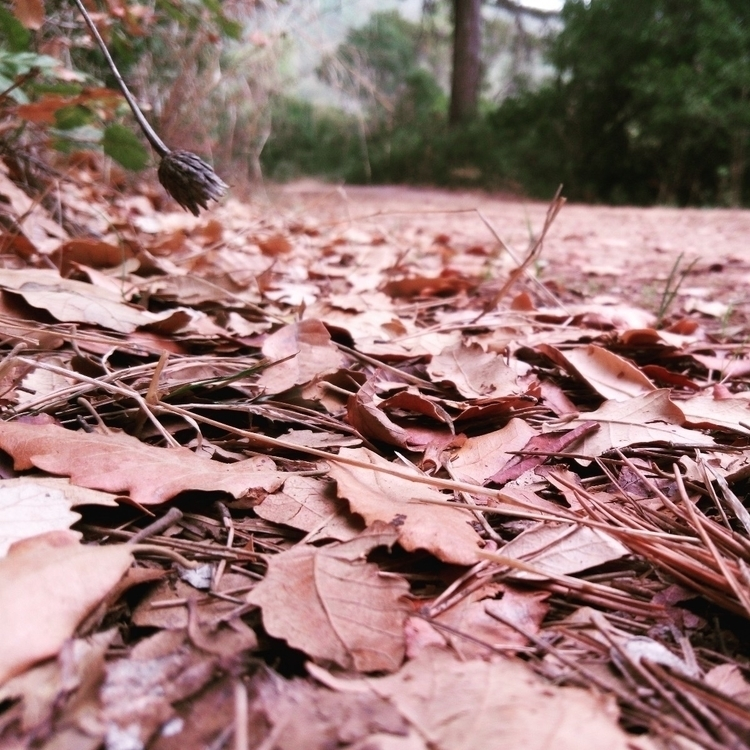Autumn leaves - enologo | ello