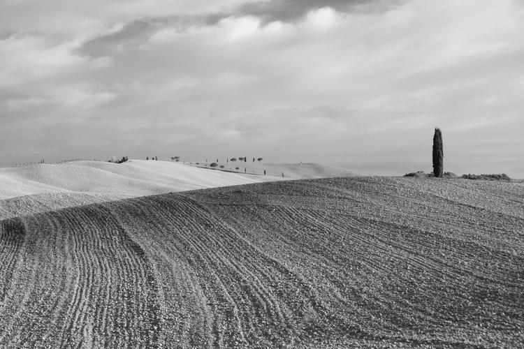 Tuscan Textures - textures, blackandwhite - stillnessimages   ello