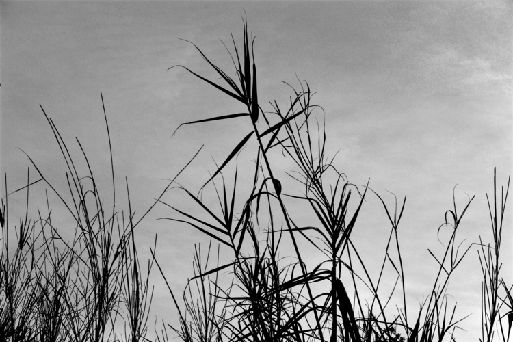 photography, blackandwhite - eduardoferrao   ello