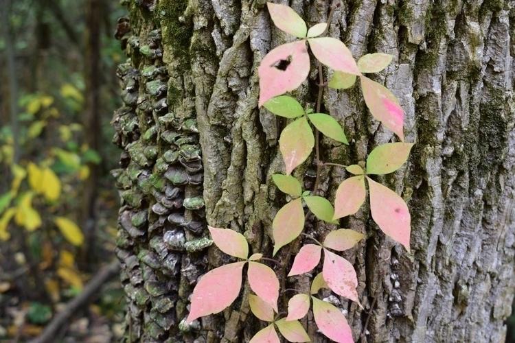 nature, photography, fall, texture - pictorific | ello