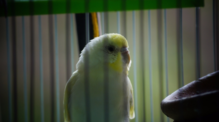 Trapped Loneliness - birds, Sonyalpha58 - noviraj | ello