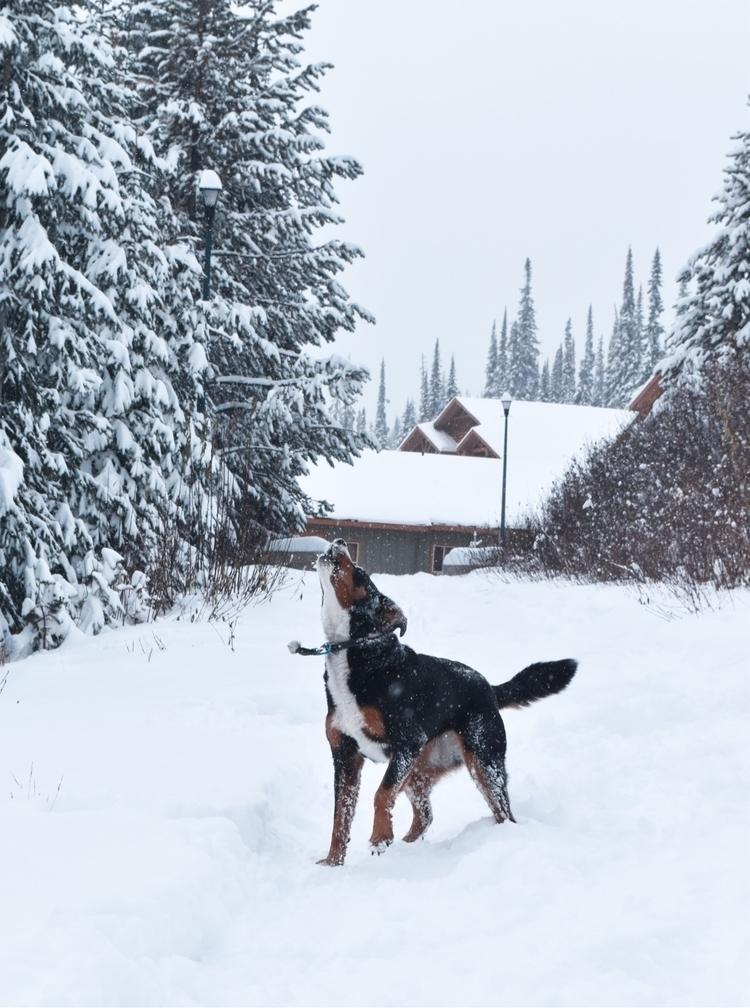 :snowflake:️:dog:SNOW PUP . ila - _ronnoco | ello