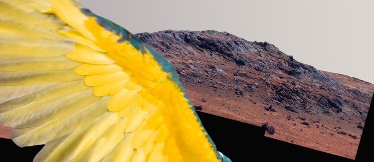 Life Mars? - photoshop collage  - _anto_ | ello