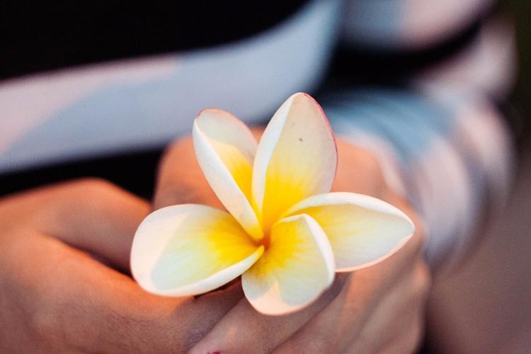 Flower - yellow, natural, photo - pedro_vc | ello