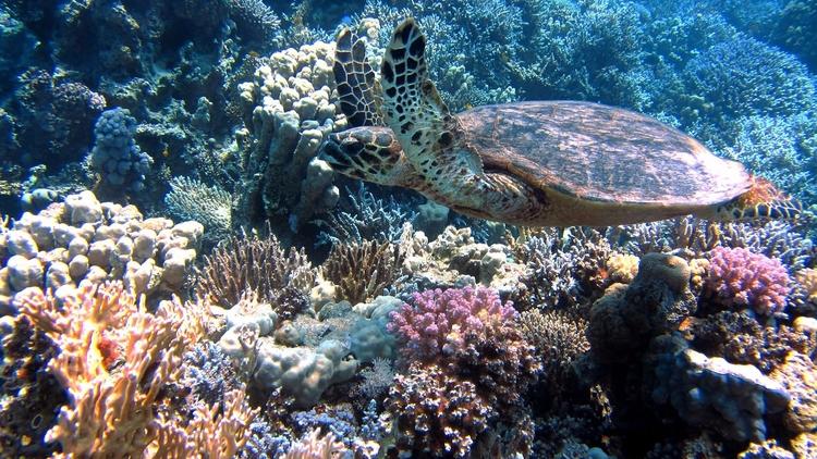NOAA predice mayor blanqueamien - codigooculto | ello