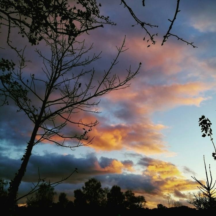 Colourful skies hanging Forest  - estelleclarke | ello