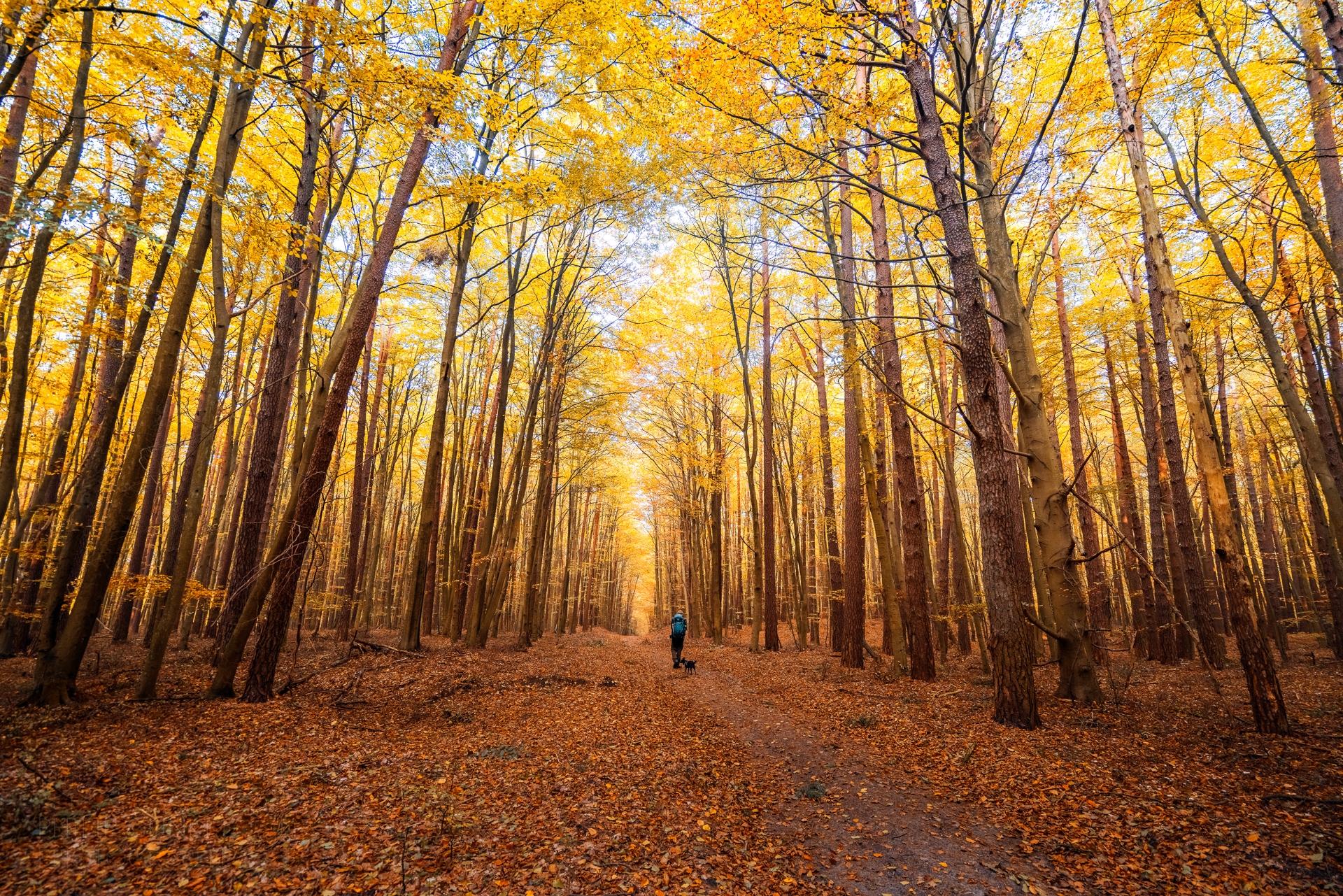 Splendid autumn foliages spotte - phigun | ello