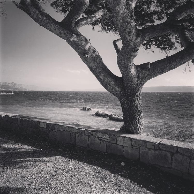 roots, surf, life - mmodic | ello
