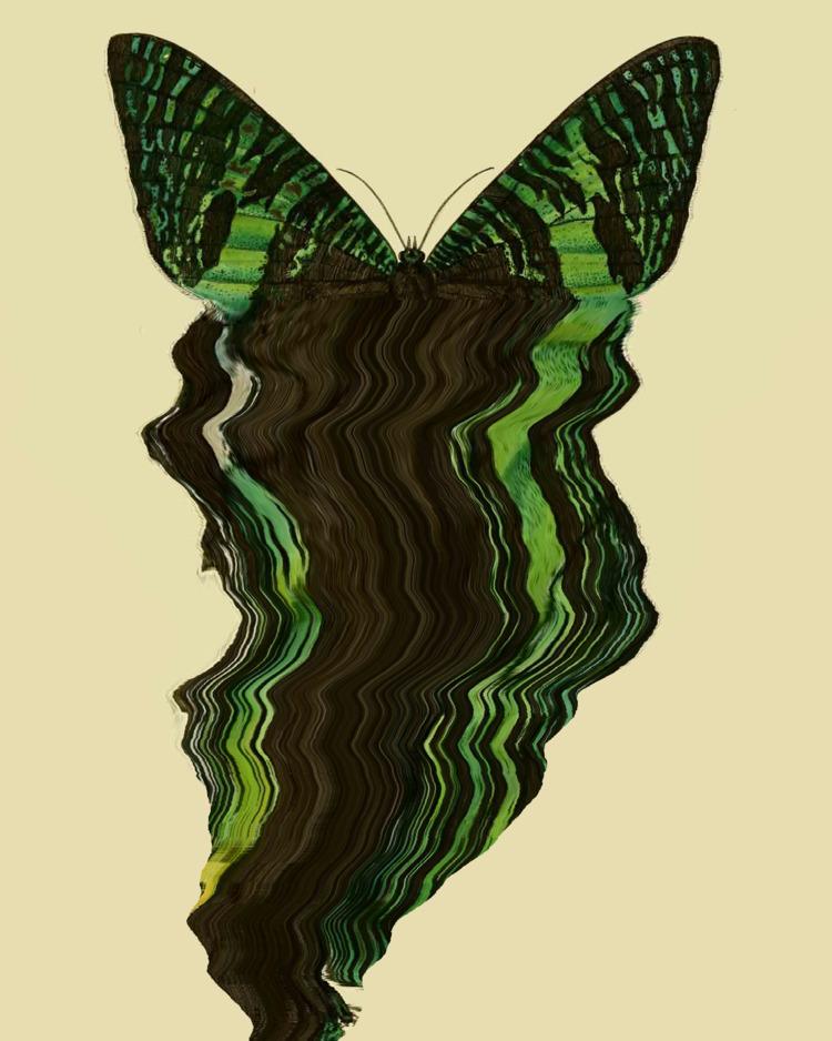 Pulling wings - dvs   ello