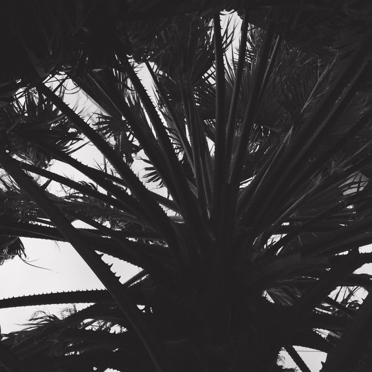 Palm Tree Evening Apps - mikefl99 - mikefl99 | ello