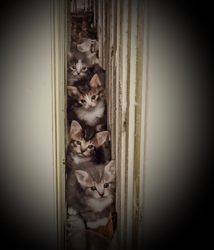 Kittens shed - Nov. 2017. stray - sacrecour | ello