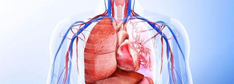 Los sistemas del cuerpo humano  - esalud | ello