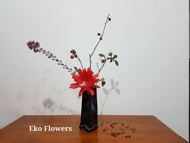 fun waxflower, epiphyllum, plum - ekoflowers | ello