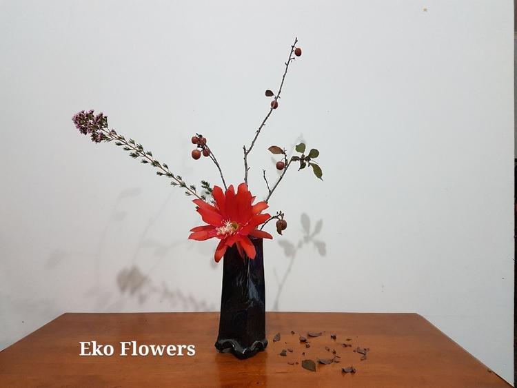 fun waxflower, epiphyllum, plum - ekoflowers | ello