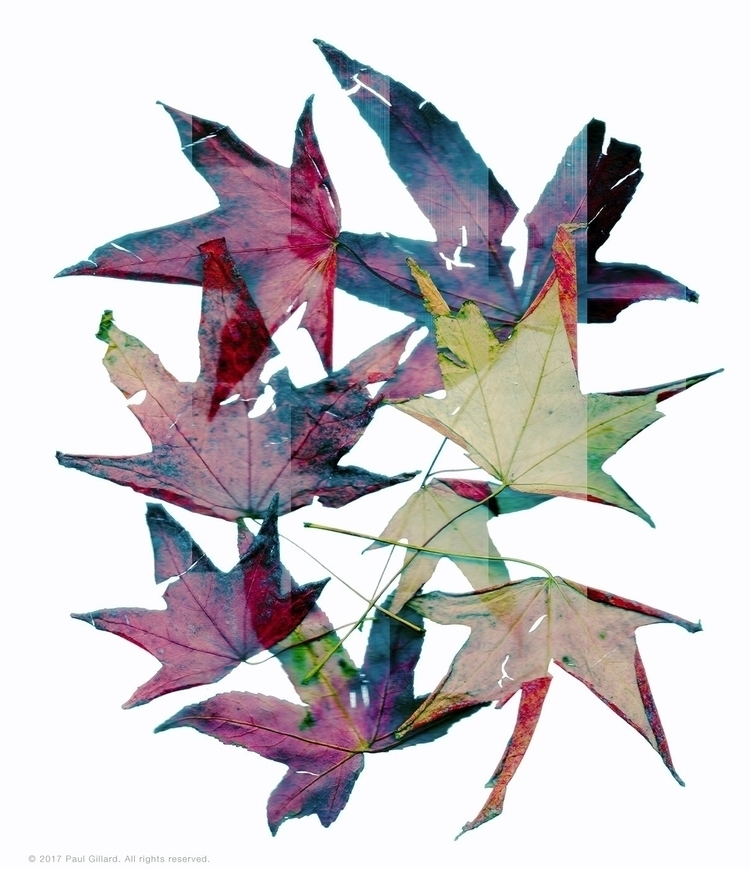 Title: Scanned Leaves - 001 - leaves - paulgillard | ello