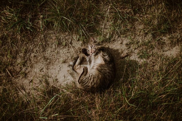 Wild life ♡ - kamilapiech | ello