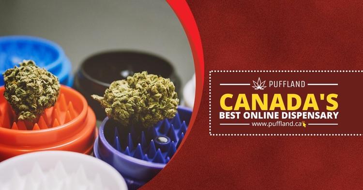 1 Online Medical Marijuana Disp - pufflandcanada   ello