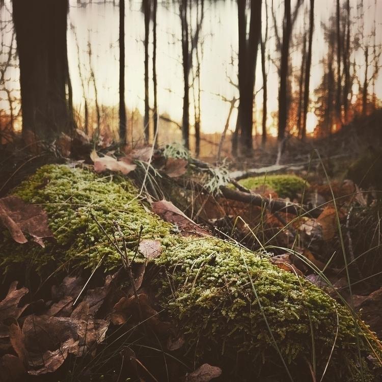 hold slow push leaves fall moss - yogiwod   ello