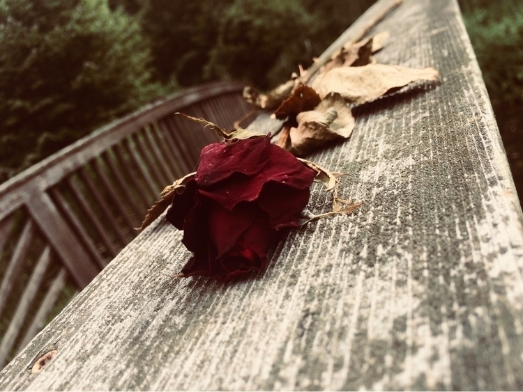 Withered Beauty - chivalrous_soulrain | ello