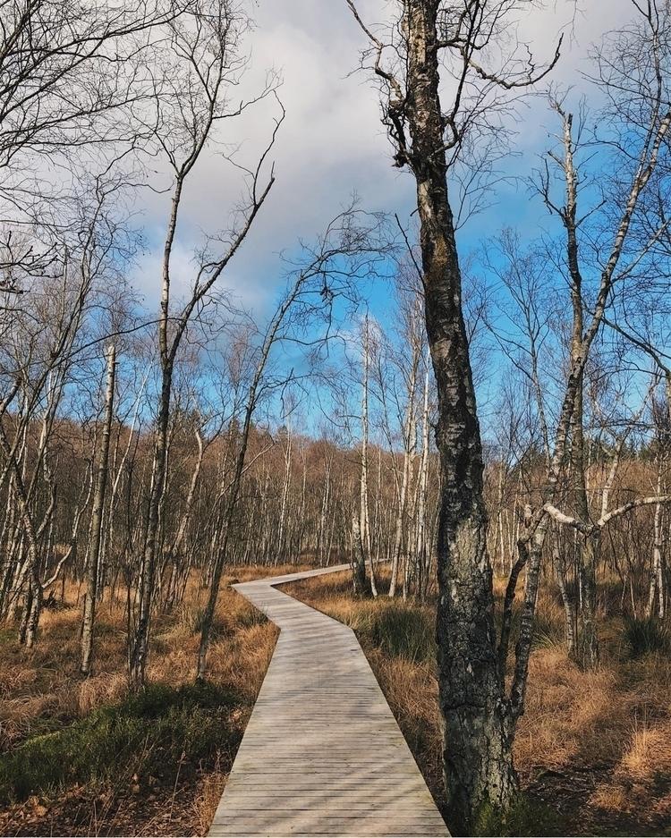 copenhagen, denmark, autumn, fall - stenbaek | ello
