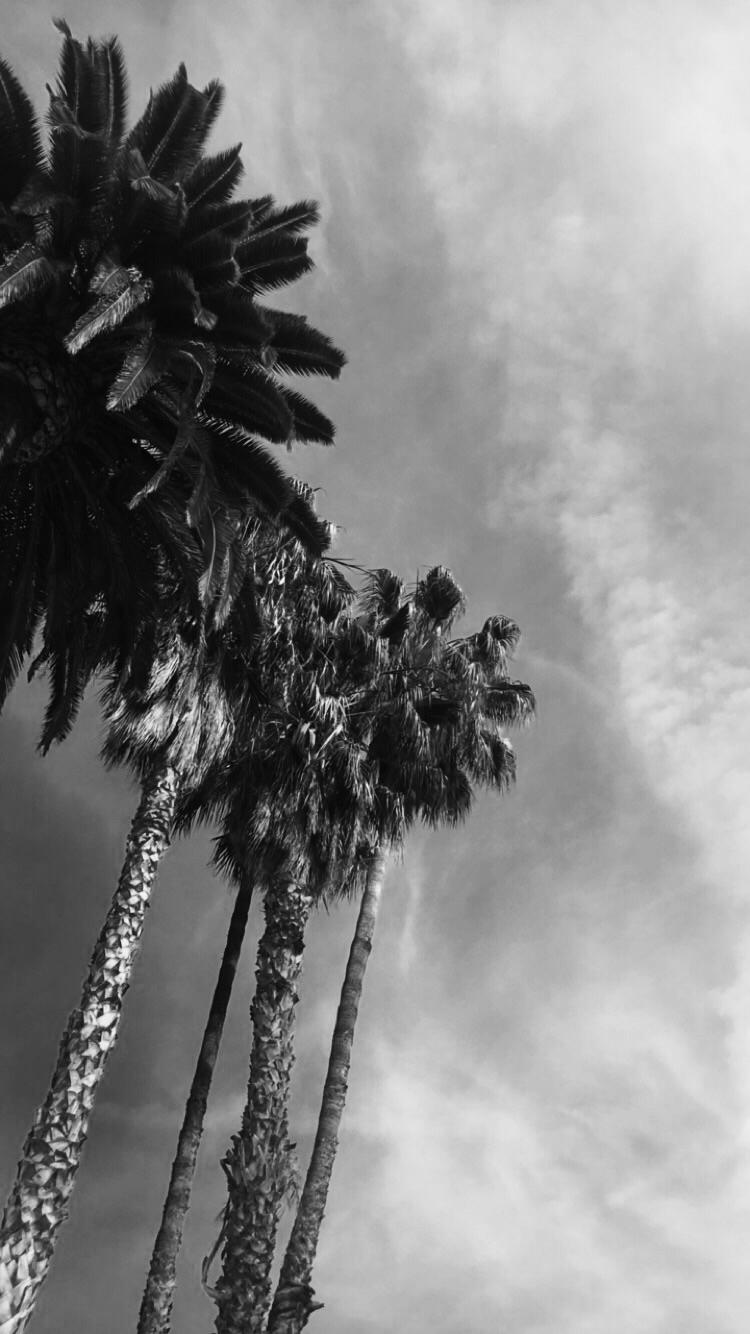 trees - palmtrees, photography, blackandwhite - natalieraymond | ello