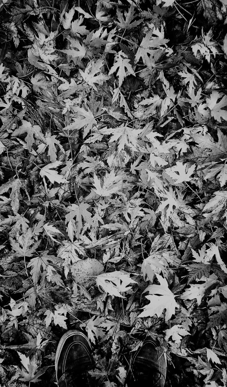 autumn, personal, 2013, blackandwhitephotography - monocromo | ello