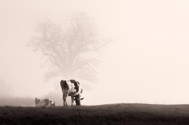 Misty morning - bradverts | ello
