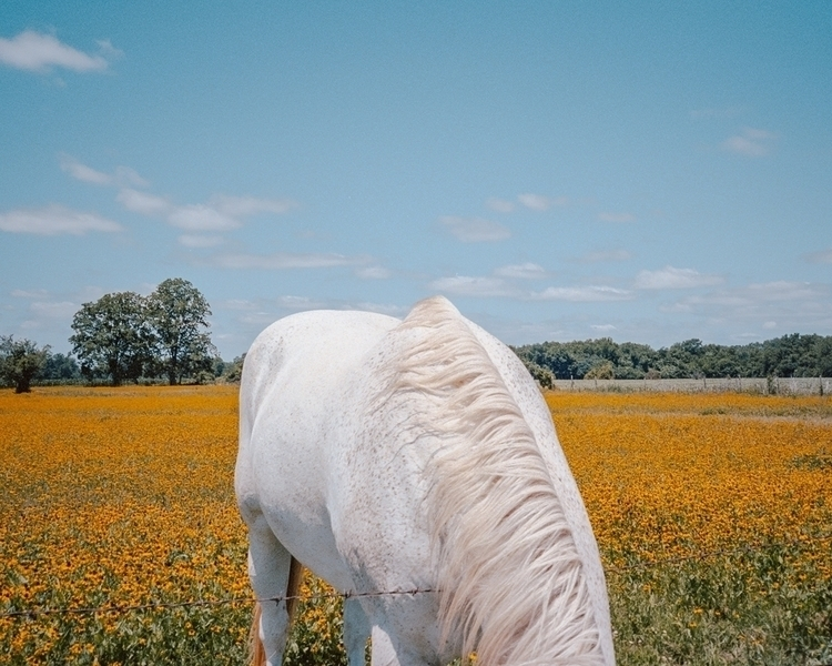 Cody Cobb - Photography - hereforthecolor | ello