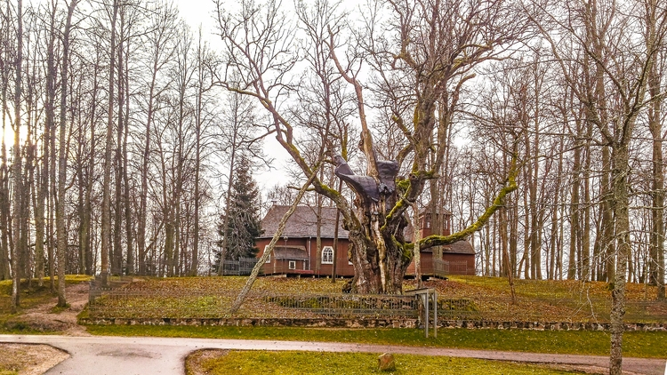 Stelmužė - 13, lithuania, oak, architecture - beheroght | ello