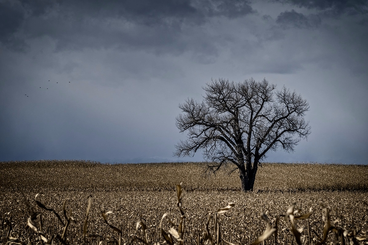 Tree. Weld County, CO - photography - doc | ello