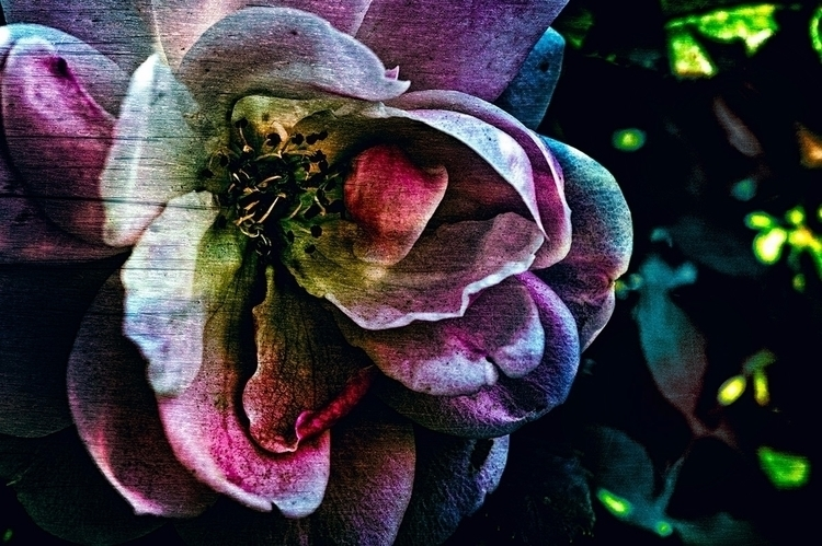 Rainbow - photography, flowers, roses - doc | ello