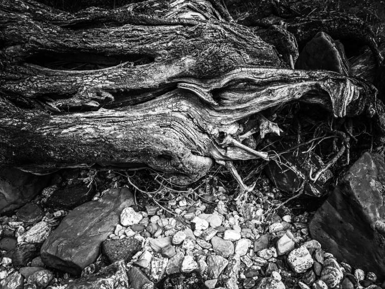 Naturescape Black White photo 2 - fenrizwolfe | ello