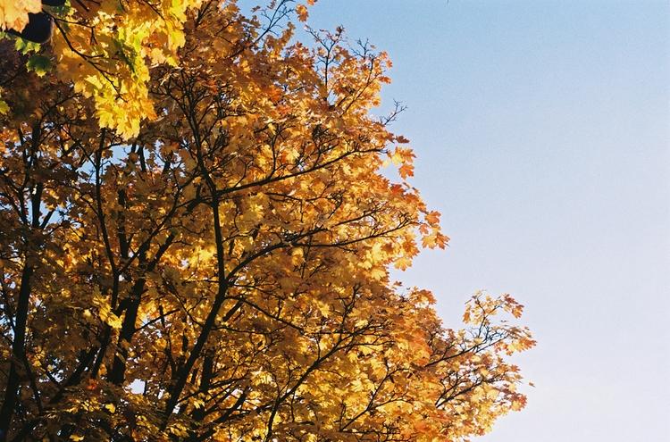 blog today. Autumnal trip Scotl - diannespanner | ello