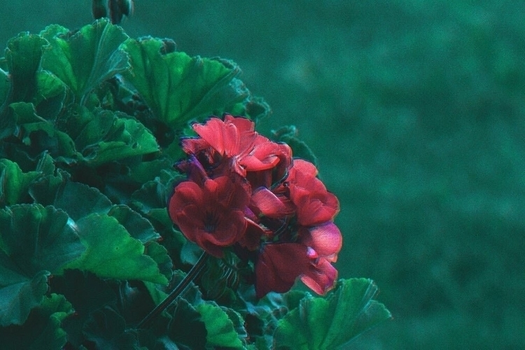 Trippy, Flowers - hovee | ello