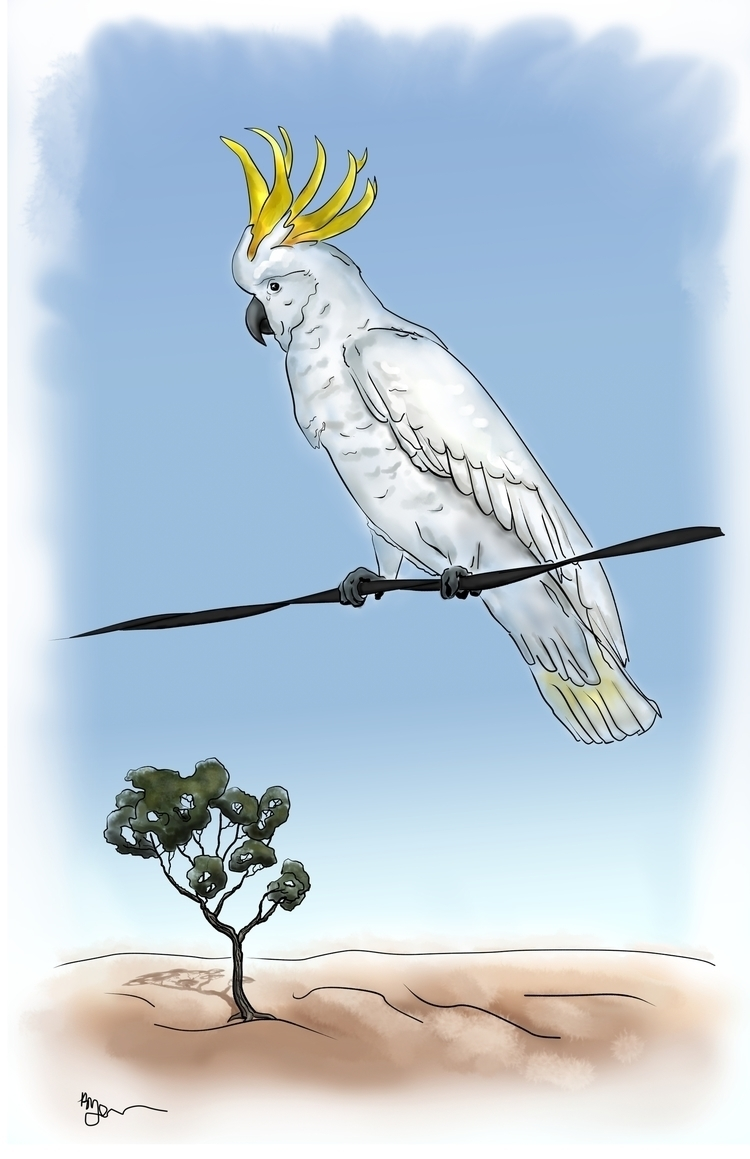 Sulphur-crested Cockatoo - illustration - rachelj-1394 | ello