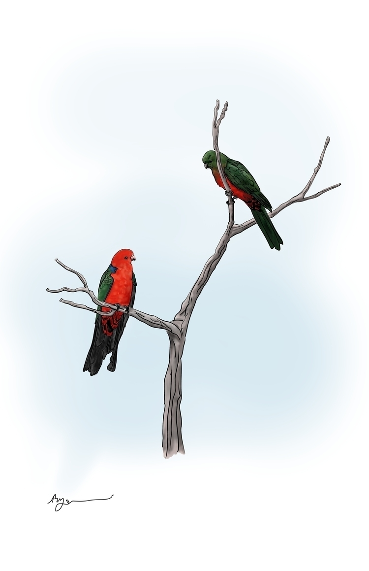 King Parrots - illustration, painting - rachelj-1394   ello