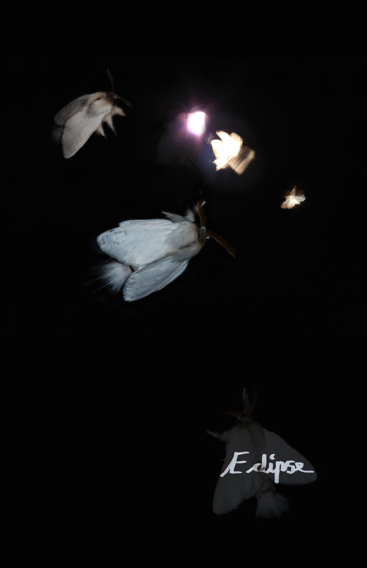 """Eclipse - rachelj-1394 | ello"
