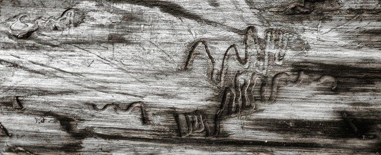 insect autographs  - monochrome - docdenny | ello