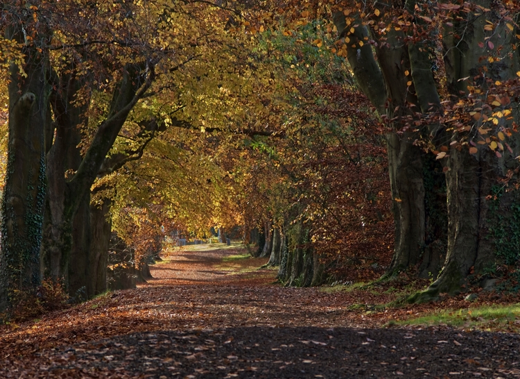Autumn Path - beautiful colours - neilhoward | ello