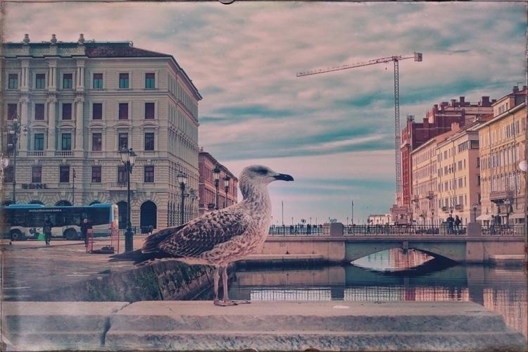 Trieste - Italy Ponte Rosso Can - andreabigiarini | ello