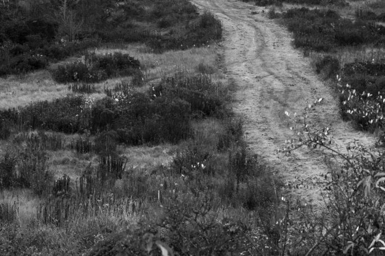 rural landscape, autumn, pathwa - stefanoaimone | ello