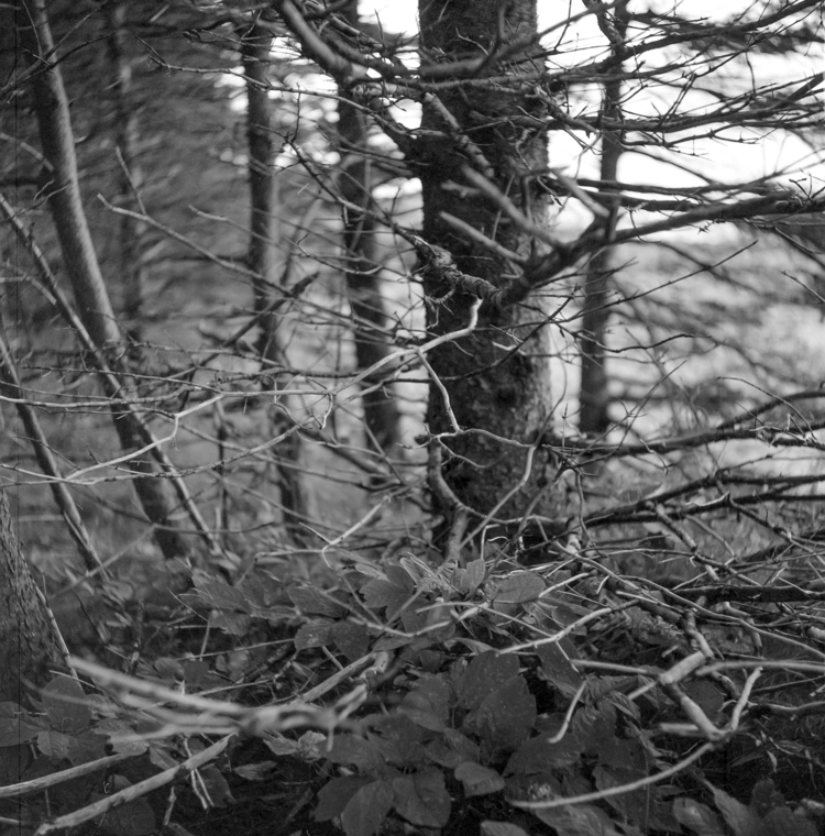 forest, trees, branches, Head,  - stefanoaimone | ello