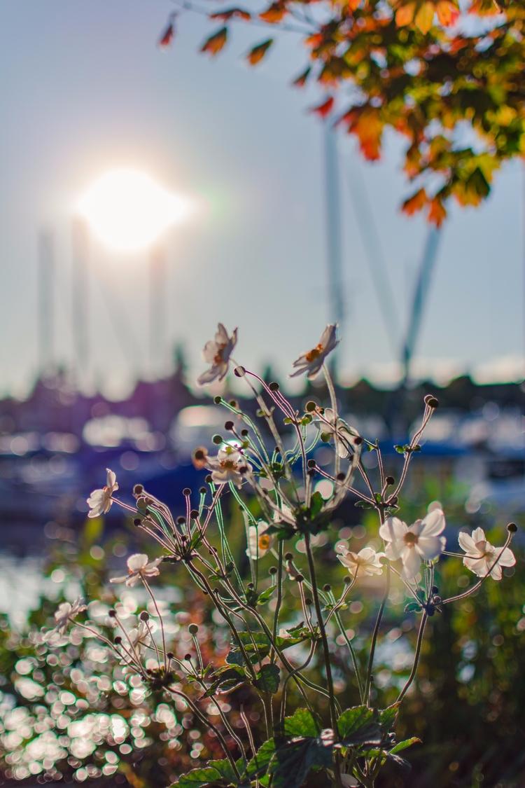 dreariness, sunshine. photos - seattle - liuisj98 | ello