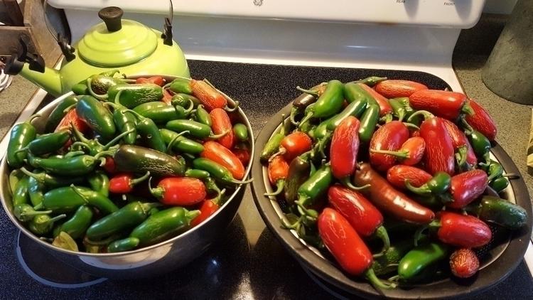 Late season garden jalapeños pi - eatlikeme | ello