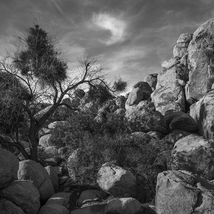 comma, Joshua Tree National Par - frankfosterphotography | ello