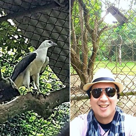 eats - Eagle, Fish, CalauitWildlifeSafari - vicsimon | ello