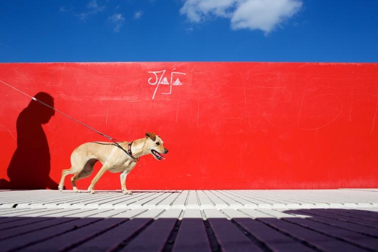 Masa dog (La Passerelle, Axe ma - alexosinho | ello