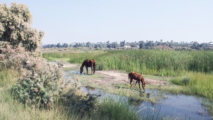 peaceful picture horses standin - yasmineyusuf | ello