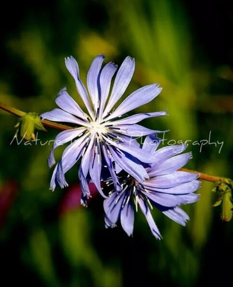 """People planet flowers mad joy  - natureisfree | ello"