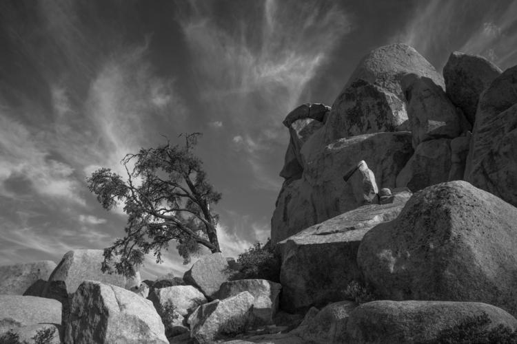 tree formations, Joshua Tree Na - frankfosterphotography | ello